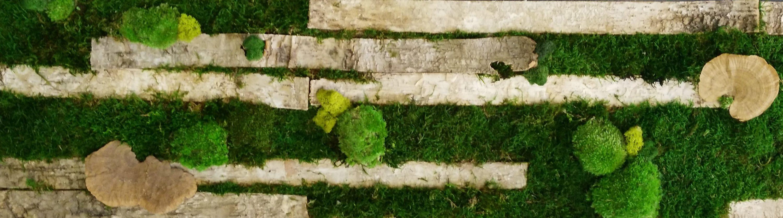 Elementos de la naturaleza en los jardines verticales