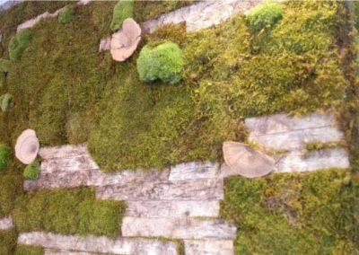 pared-con-musgo-tree-and-moss-musgogreen-cafe-central-granada